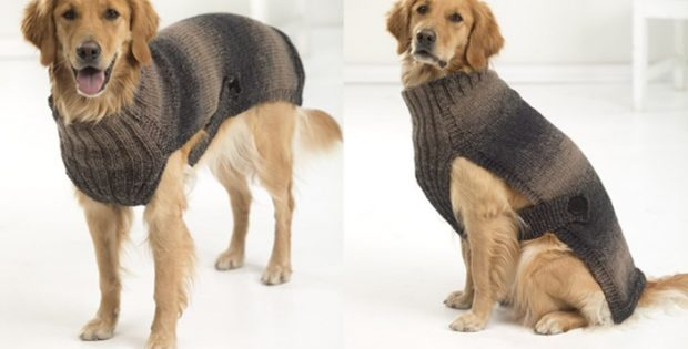 Hunter's urban knitted dog sweater | the knitting space