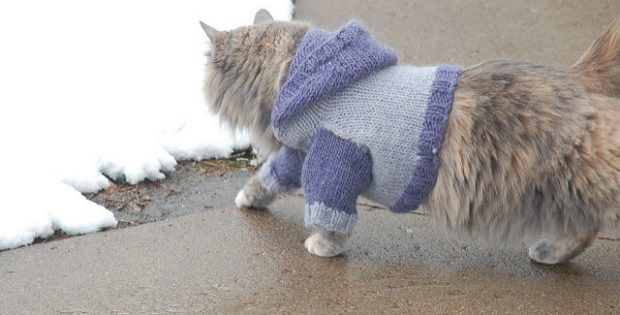 super cute knitted cat hoodie | the knitting space