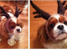 adorable knitted dog antler head band | the knitting space