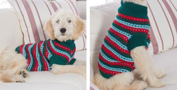 Stylish Knitted Dog Sweater [FREE Knitting Pattern]